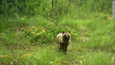 رشد گونه های حیات وحش در حومه نیروگاه فوکوشیما